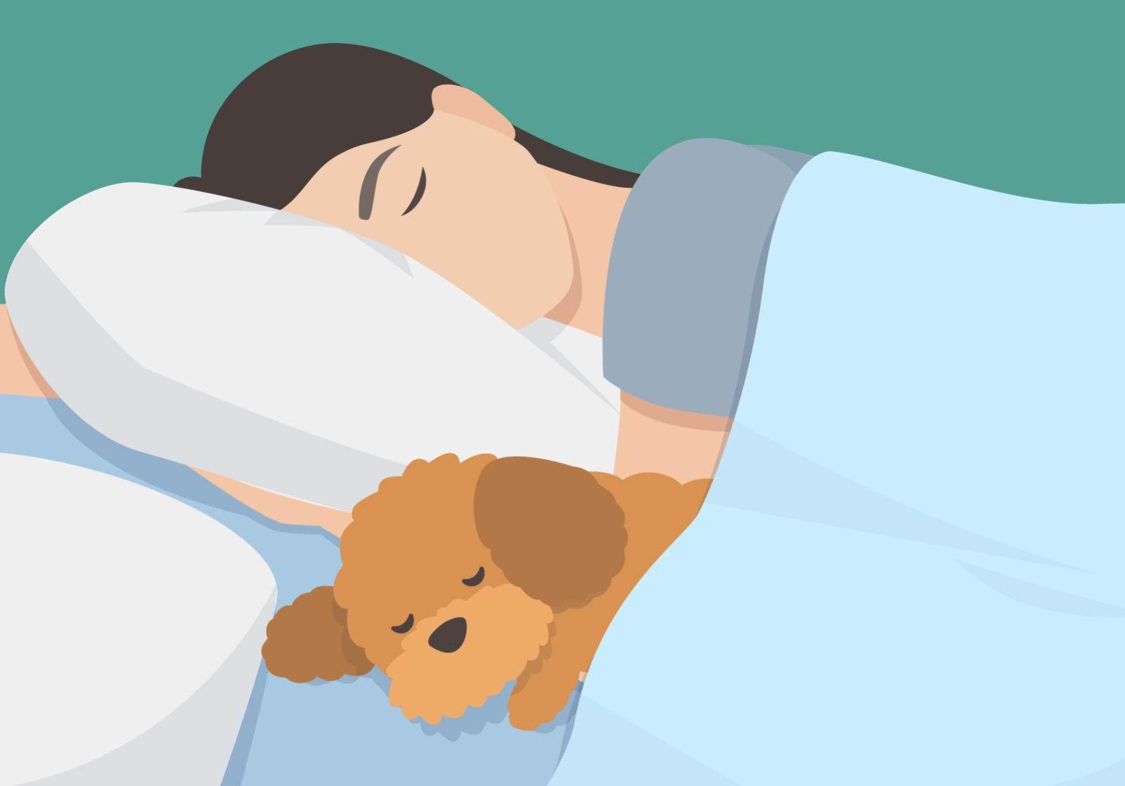 Hund im Bett: Einer Studie zufolge sind Hunde die besseren Bettgenossen.