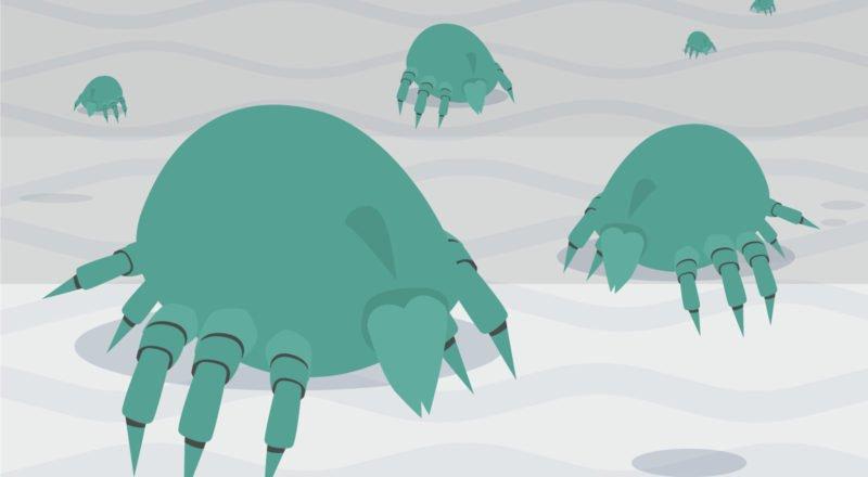 Milben erkennen und bekämpfen