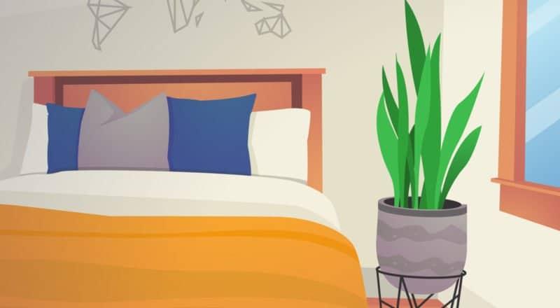 Pflanzen im Schlafzimmer - sind sie gesundheitsfördernd oder gesundheigsschädlich?