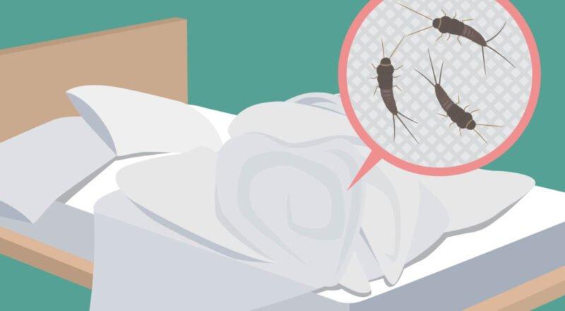 Silberfische im Bett: Es sind kleine ungefährliche, flügellose und nachtaktive Insekten.