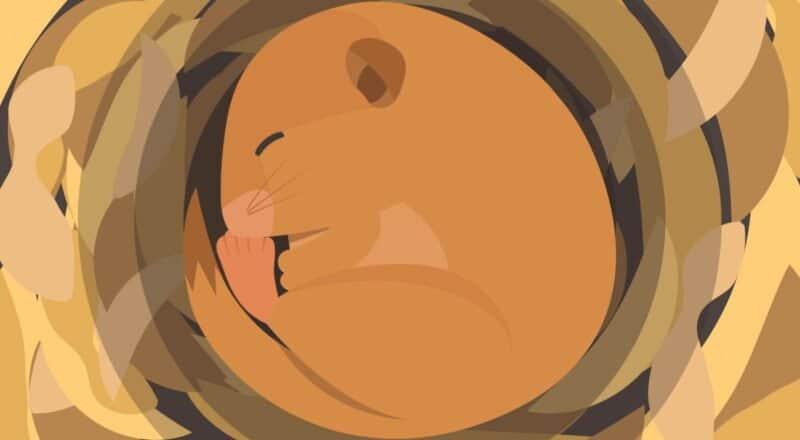 Winterschlaf: Er ist in mehrere Schlafabschnitte unterteilt und wird von Wachphasen unterbrochen.
